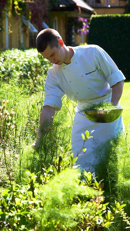 Chef Picking Herbs
