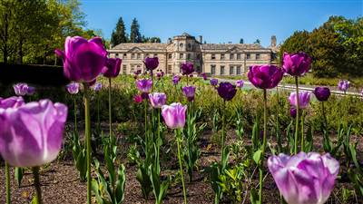 Front of hall with tulips