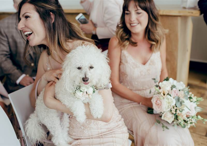 wedding celebration with dog at Hope Street Hotel