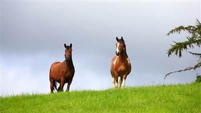 Powerscourt horses