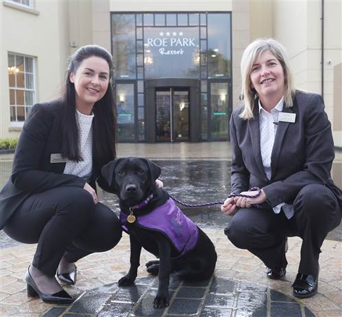 Paws-itive Partnership with Assistance Dogs NI!