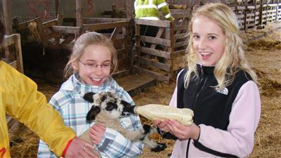 Feeding Lambs - April